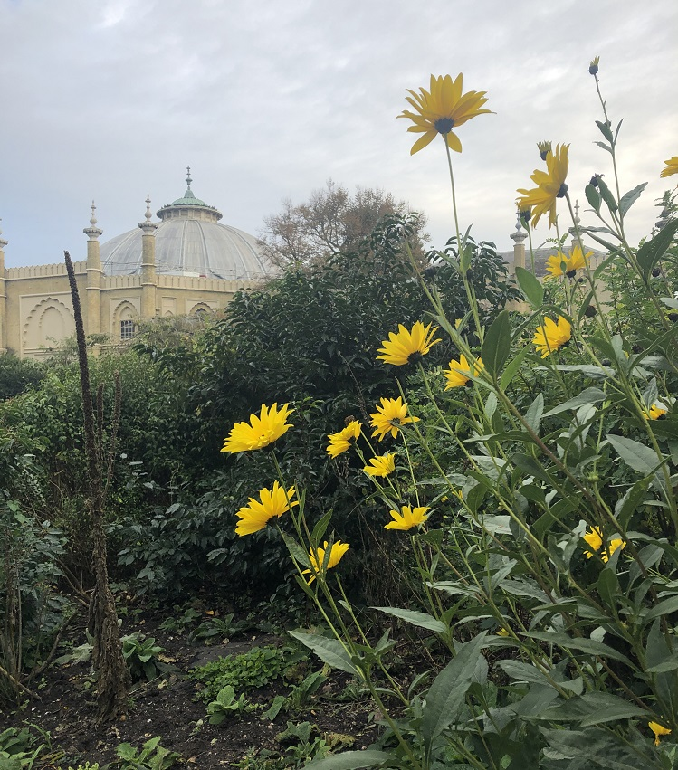 Yellow flowers growing in front of a historic building
